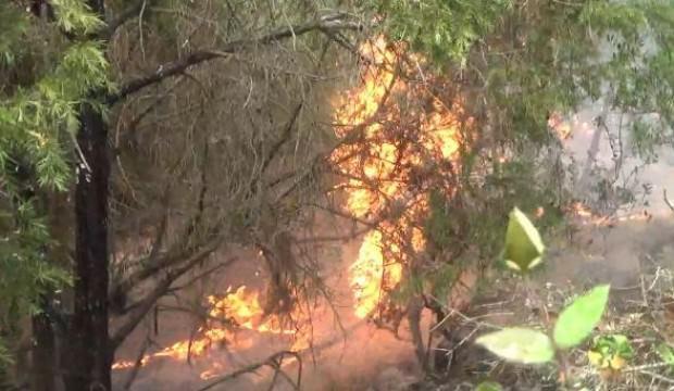 Çanakkale'de ormana yıldırım düştü; 2 hektar alan yandı