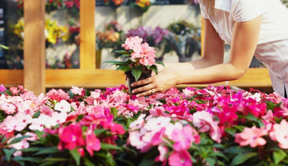 Saksı çiçeklerinin sineklenmesi nasıl önlenir? Pratik yöntemi...