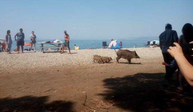 Ünlü plajda şaşkına çeviren görüntüler