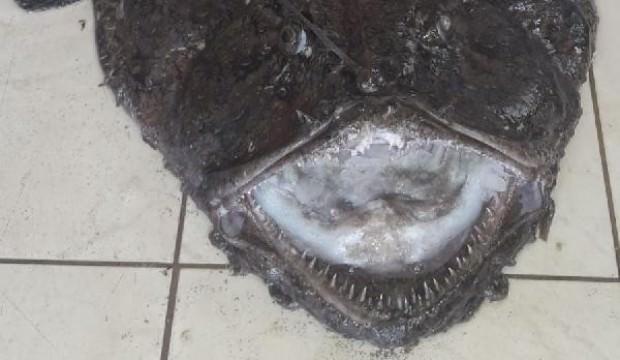 Çanakkale'de ağlara takıldı! Görünce şaşkına döndüler