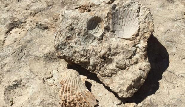 35 milyon yıllık fosiller incelenecek