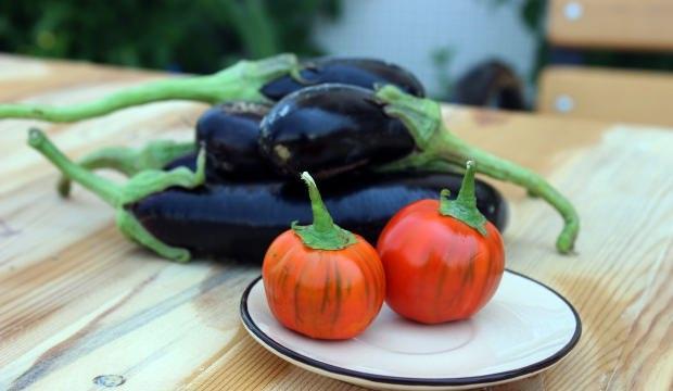 Domates görünümlü patlıcan, görenleri şaşırttı