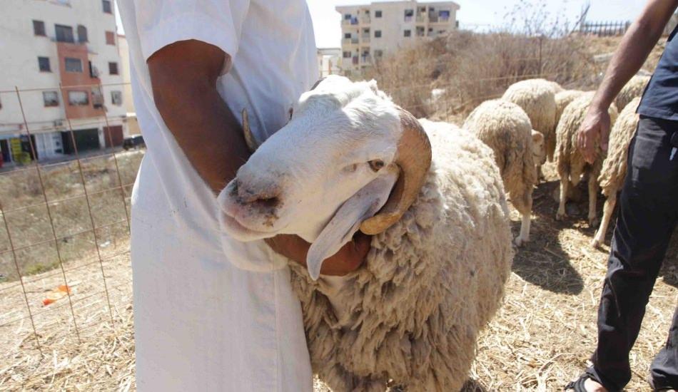 Allah'a ilk kurbanı kim sundu? Kurban kesmek farz mı? Kurbanla ilgili merak edilenler