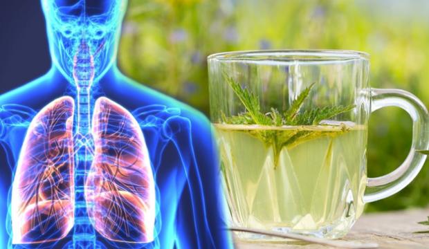 Akciğerleri temizleyen en etkili doğal ilaçlar nedir? - SAĞLIK Haberleri