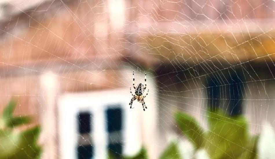 Örümceğe zarar vermeden kurtulmanın yolları