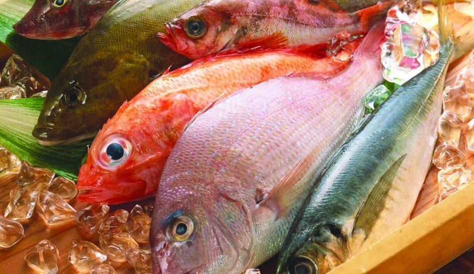 Balığın bağışıklığa etkileri! Balığın faydaları nelerdir? Balık en sağlıklı nasıl tüketilir?