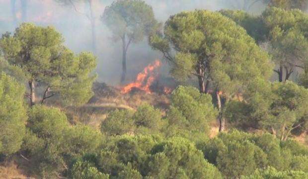 Sigara izmariti ormanı yaktı