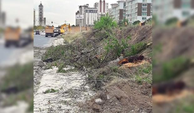 Ankara'da ağaç katliamı! CHP şimdi ne diyecek