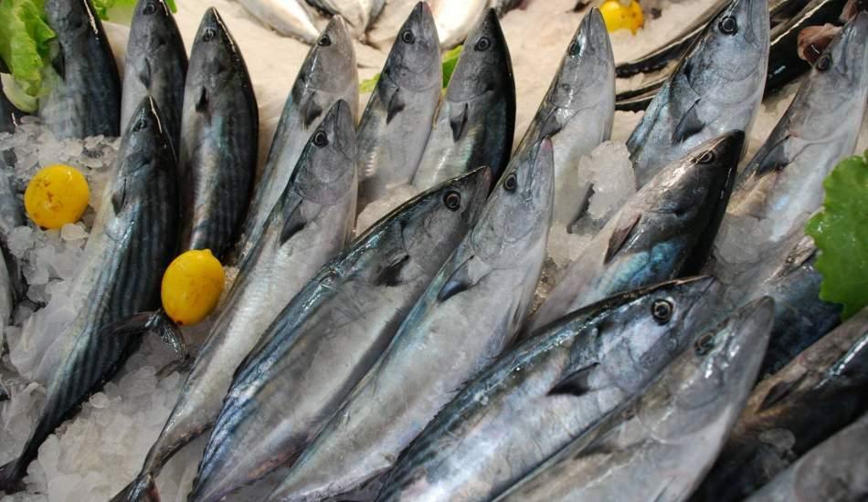 Palamut balığının faydaları nelerdir ve neye iyi gelir? Hangi balık nasıl tüketilmelidir?