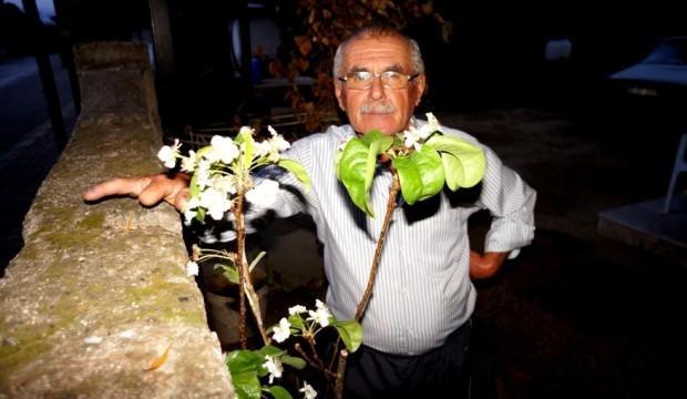 Armut ağacı Eylül ayında çiçek açtı