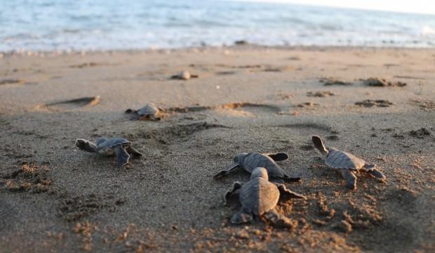 Dünyanın gözü Türkiye'nin bu sahilinde