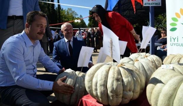 30 kiloluk kabak 20 bin liraya alındı