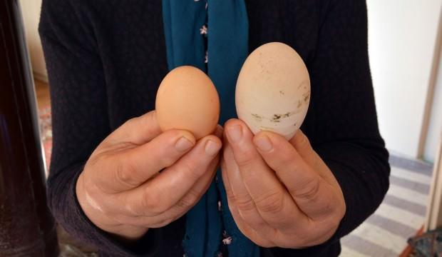 Bu yumurtayı görenler gözlerine inanamıyor