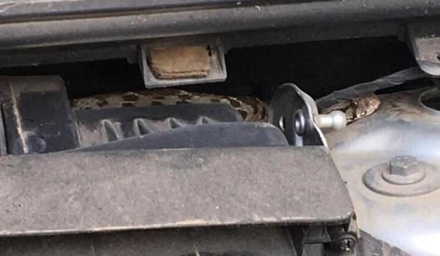 Araba satın aldı, içinden yılan çıktı! Eski sahibi yılanı geri istedi