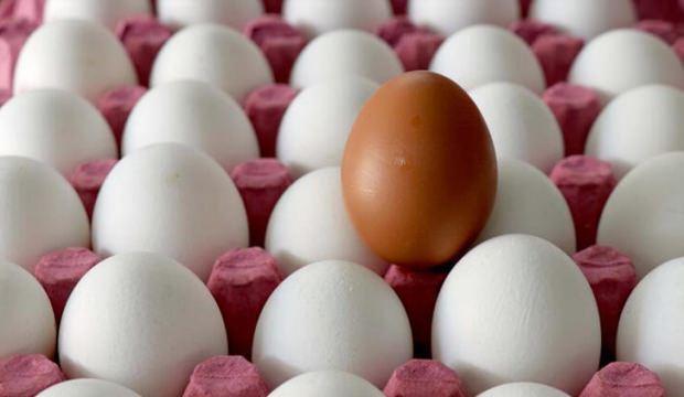 1.7 milyar adet yumurta üretildi