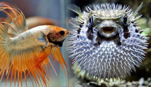 Rüyada balık görmek neye işaret   Rüyada balık iyi mi kötü mü yorunlanır?