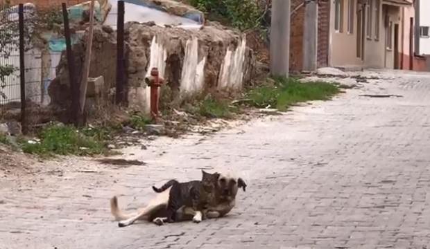 Kedi ile köpeğin dostluğu!
