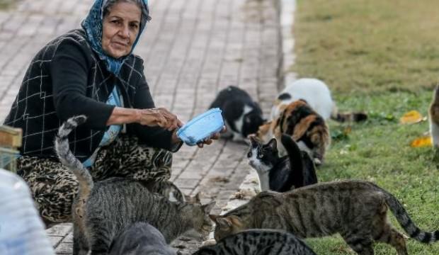 Parkta yaşayan 150 kediyi besliyor