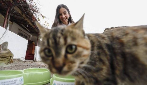 Sokak kedileri için harçlığı yetmeyince ombudsmana başvurdu