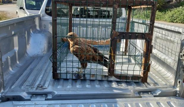 Bu kuşu yakalamanın bedeli çok ağır oldu