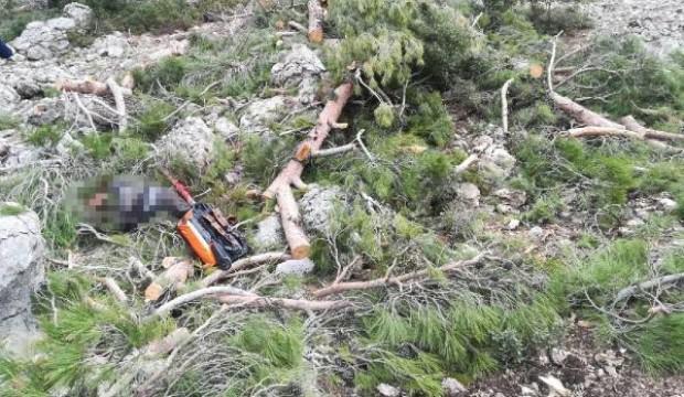 Ağaç kesmeye giden adamın korkunç ölümü