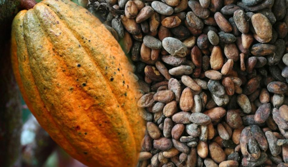 Kakaonun faydaları nelerdir? Kakao hem hafızayı güçlendiriyor ve mutluluk hormonunu çalıştırır!