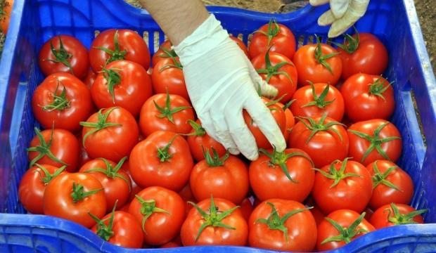Rusya, Türkiye'den domates ithalatını artırıyor