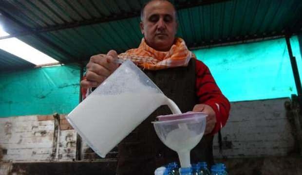 Kilosu 100 TL olan deve sütüne yoğun talep