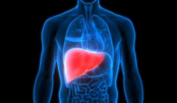 Karaciğer yağlanması neden olur? Karaciğer yağlanmasına iyi gelen besinler  - SAĞLIK Haberleri