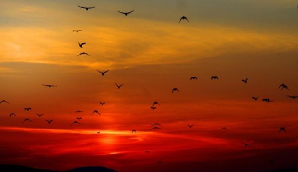 İşrak veya Duha (kuşluk) namazının faziletleri! Kuşluk namazı nasıl kılınır?