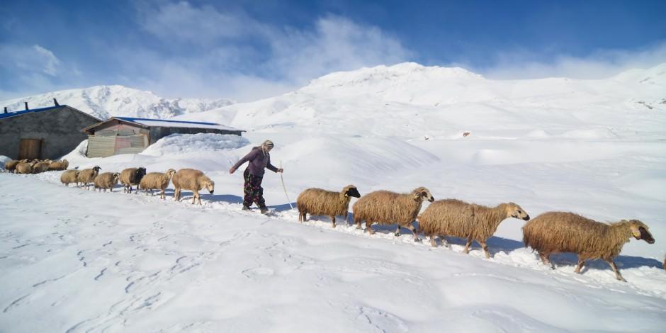 Mercan ve Munzur Dağları eteklerinde zorlu kış yaşamı