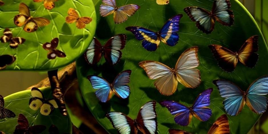 Konya Tropikal Kelebek Bahçesi yenilendi