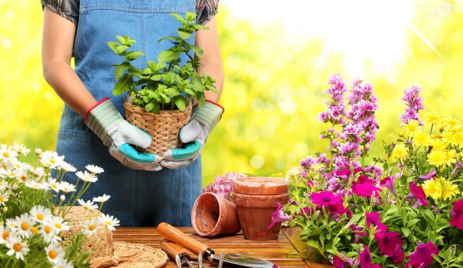 Şubat ayında bahçe bakımı nasıl olmalıdır?
