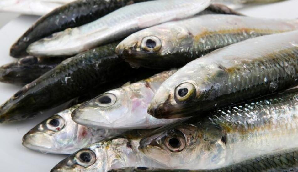 Uskumru balığı en kolay nasıl ayıklanır?