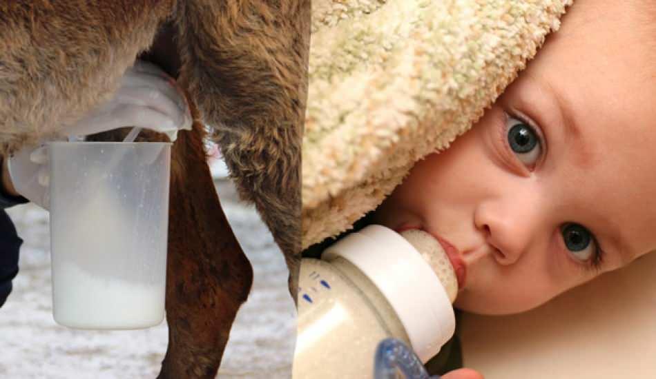 Anne sütüne en yakın süt hangisi? Anne sütü eksikliğinde bebeğe ne verilir?