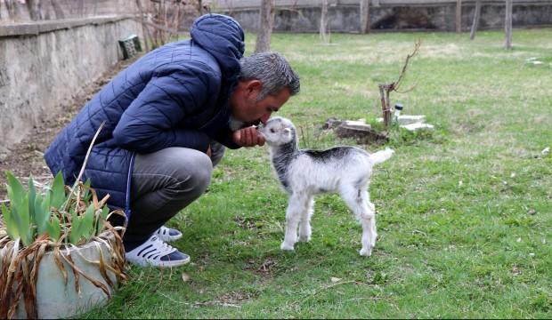 Annesini ayı yiyen keçi yavrusunu ölmekten gazeteci kurtardı