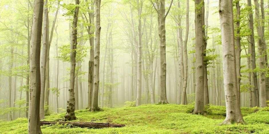 Bu sonbahar İstanbul'daki ormanları keşfedin