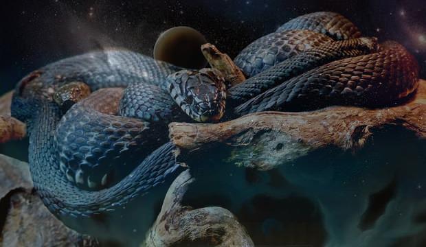 Rüyada yılan görmek nasıl yorumlanır? Rüyada kara yılan görmek neye işaret?
