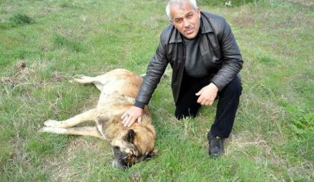 Çoban köpeğini bu halde bulunca gözyaşlarına boğuldu