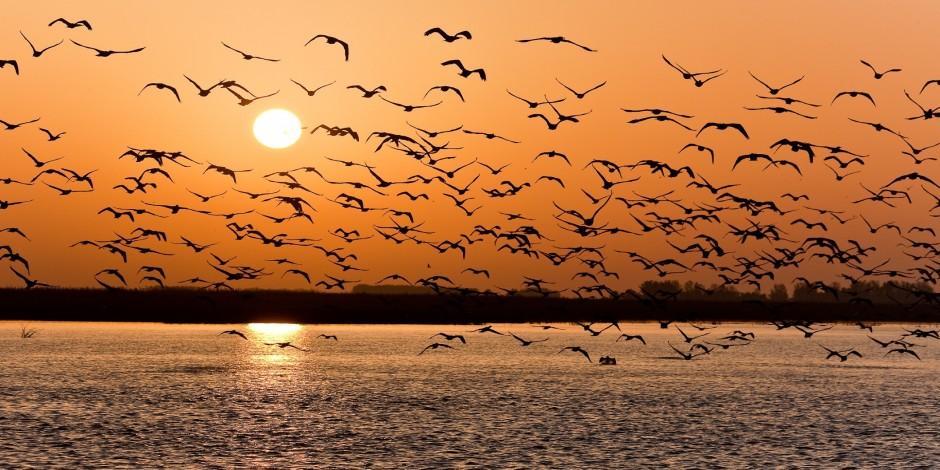 Onların sınırı yok: Göçmen kuşların Türkiye'deki durak yerleri
