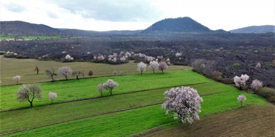 'Yanık Ülke' Kula ilkbaharla renklendi