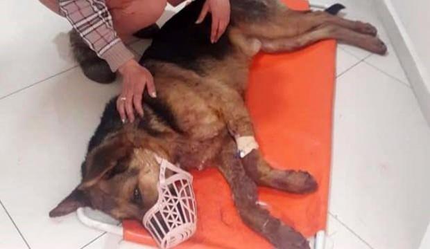Çarptığı köpeği ölüme terk edip kaçtı
