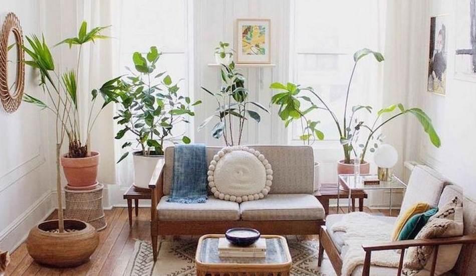 Çevre dostu bir ev için uygulamanız gereken dekoratif adımlar