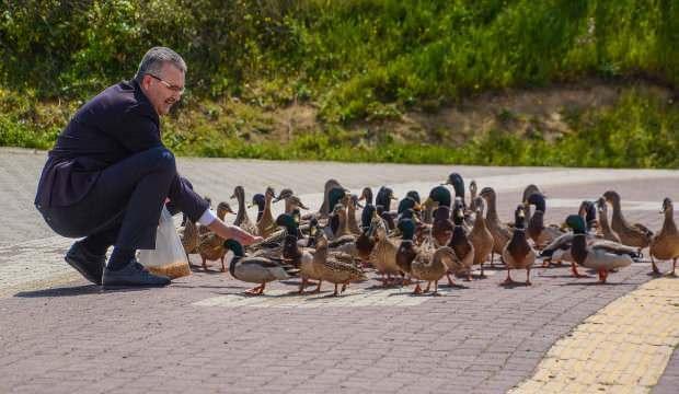 Belediye başkanı ördekleri elleriyle besledi
