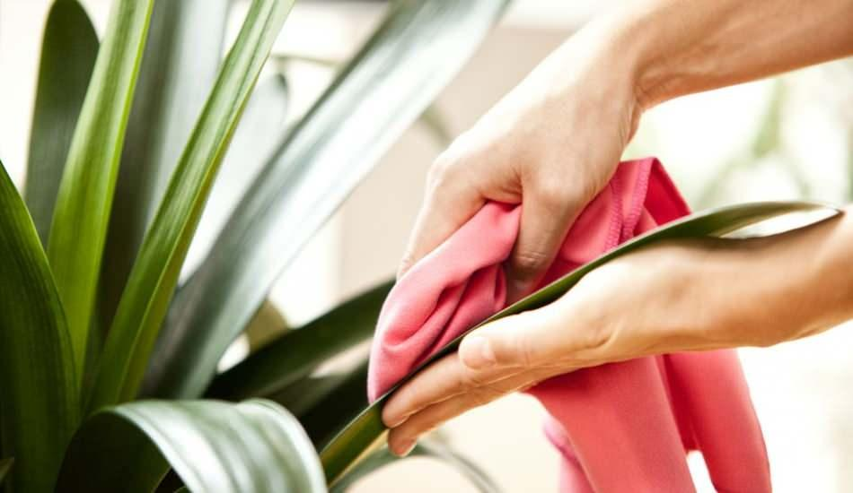 Çiçekleri incitmeden üzerinde biriken tozlar nasıl silinir? Çiçeklerin tozu nasıl alınır?