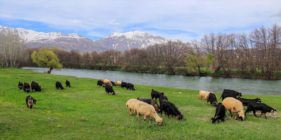 Munzur Dağları ilkbaharda görsel şölen sunuyor