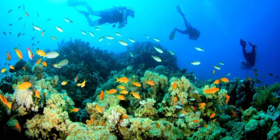 Zanzibar'ın keşfedilmeyi bekleyen sualtı canlıları