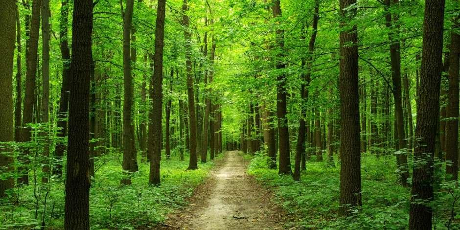 Muğla'nın saklı kalmış turizm cenneti: Sığla Ormanları