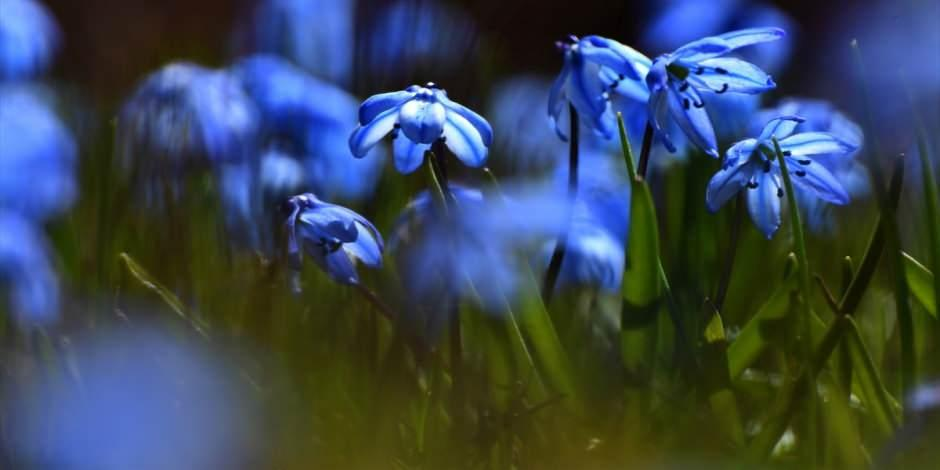Sarıkamış'ta ilkbahar güzelliği