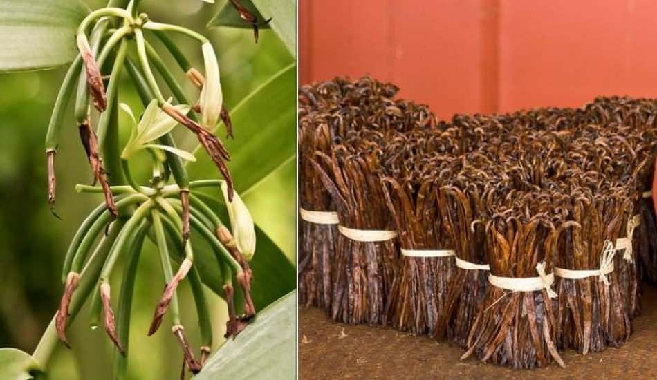 Şekerli vanilin nedir? Vanilya ile Vanilin Aynı şey midir? Şekerli vanilin yapımı